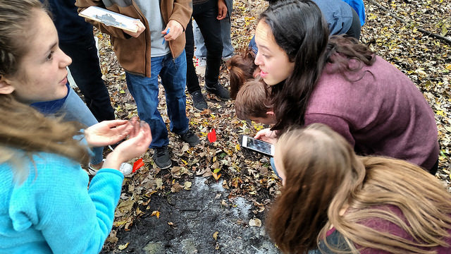 Students investigate invasive earth worms.