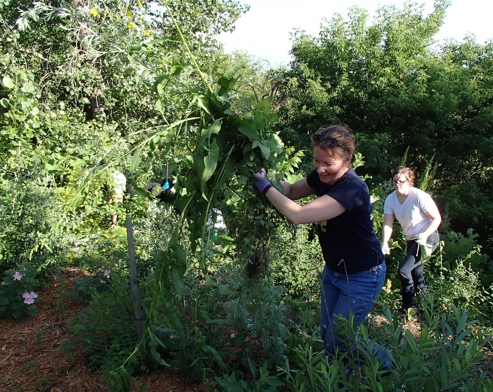 Volunteers tend the prairie at Indian Mounds Park.
