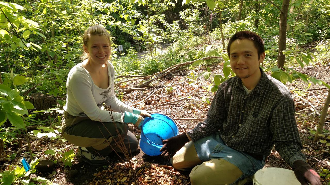 Volunteers planting native shrubs along the River Gorge