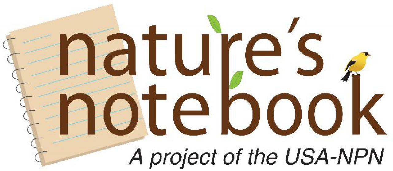 Become a citizen scientist with the USA National Phenology Network