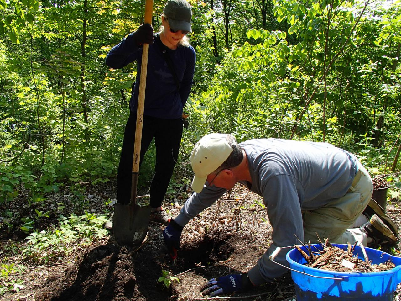 Volunteers planting native shrubs