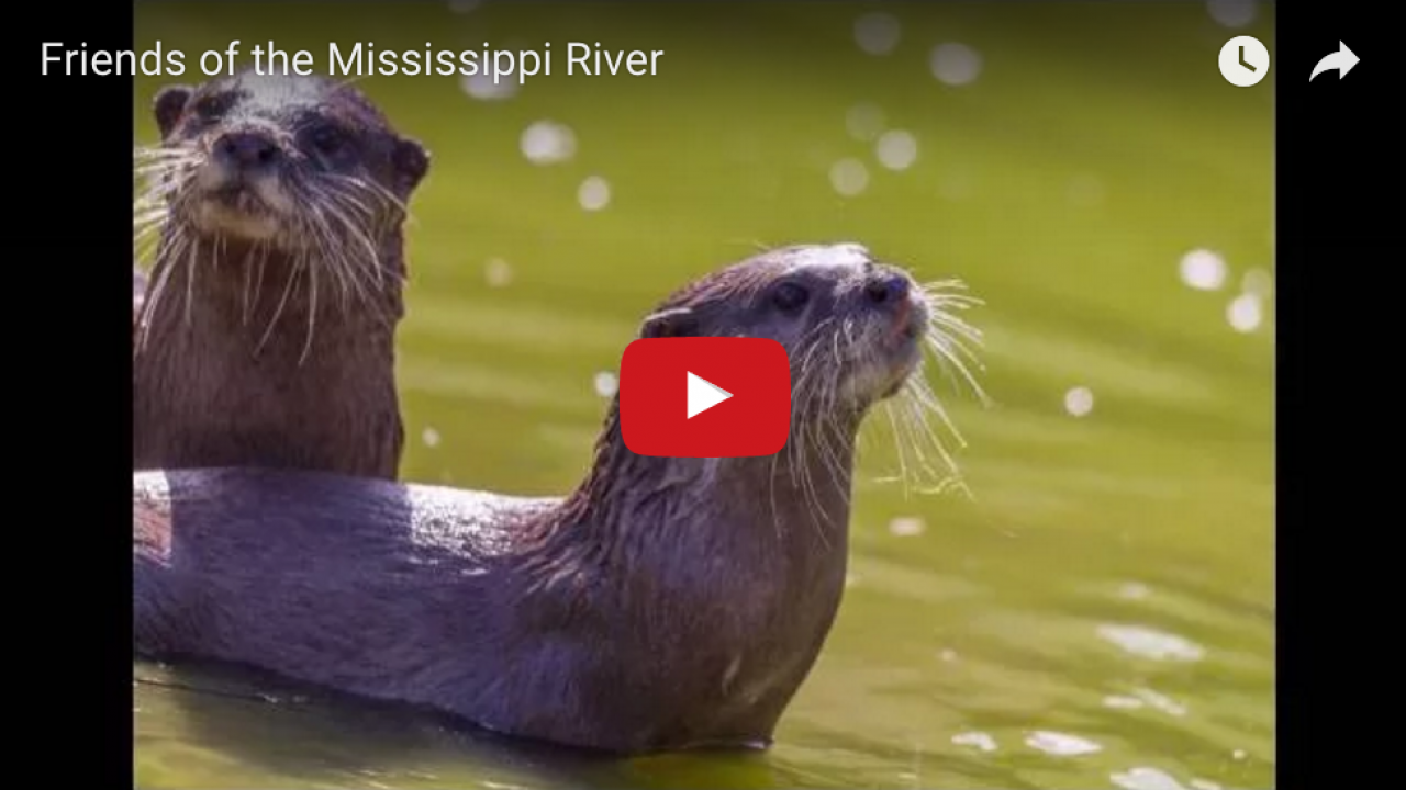 Hear the Kool 108 Friends of the Mississippi River broadcast!