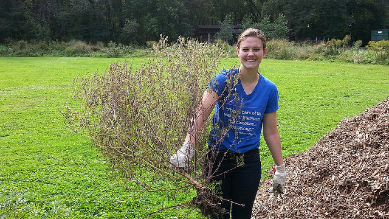 Clare shows off the large ragweed plant she pulled out of the native planting at Crosby Farm Park.