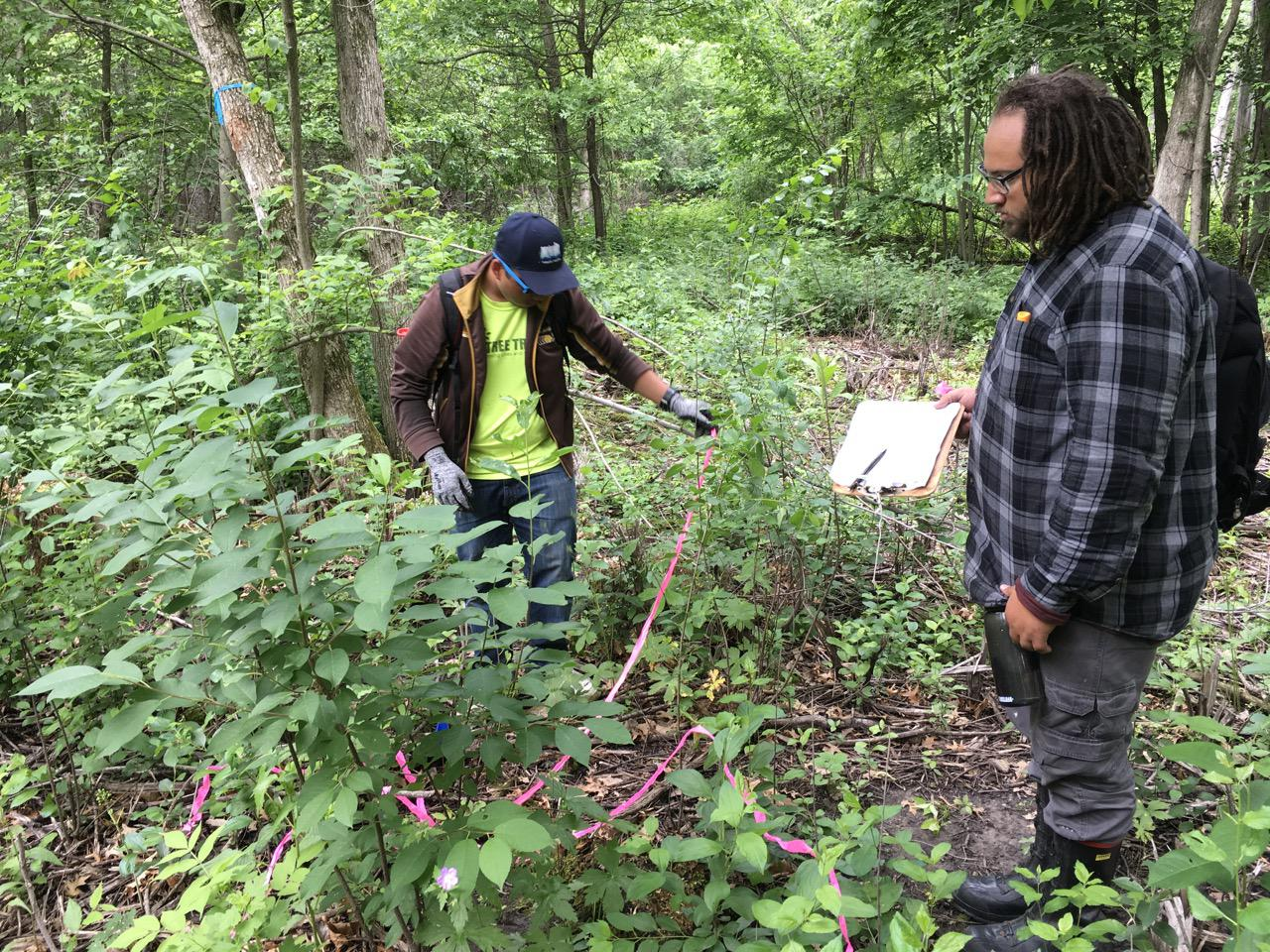 Two ecology interns monitor vegetation at Hampton Woods WMA