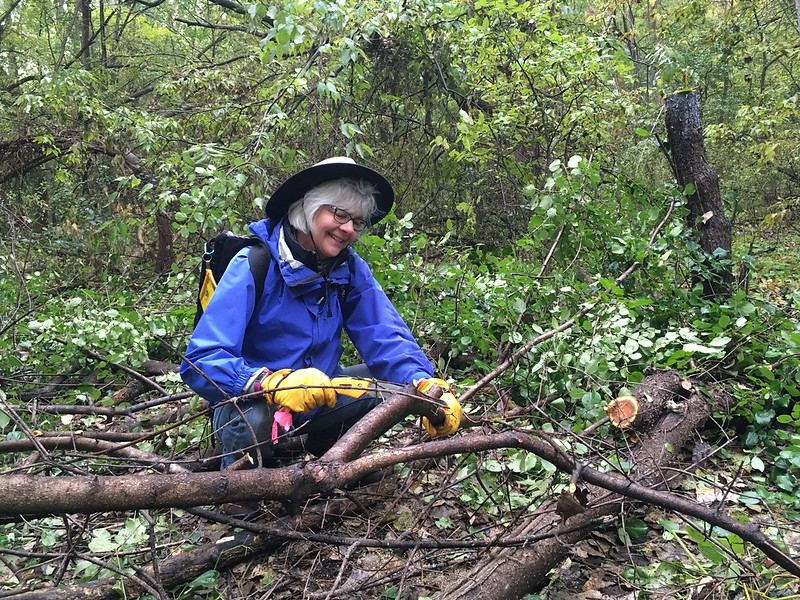 Volunteer Barb Thoman saws a felled buckthorn tree into smaller pieces.
