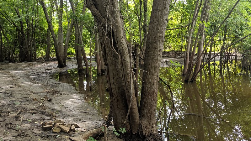 Trees grow in water along a muddy river shoreline.