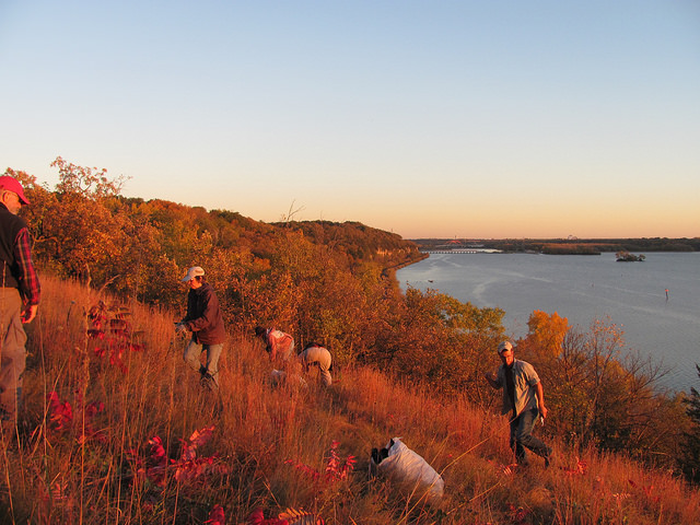 River Oaks Park glows red at a mid-October habitat restoration event