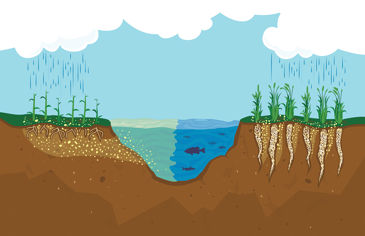 Perennial root systems hold soil and nutrients