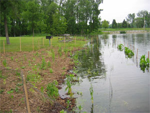 [Photo: Planting area flooded after the planting was completed.]