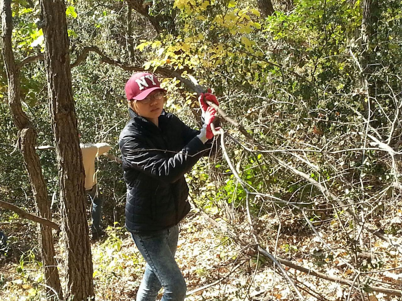 Volunteer hauling brush from the oak woodlands