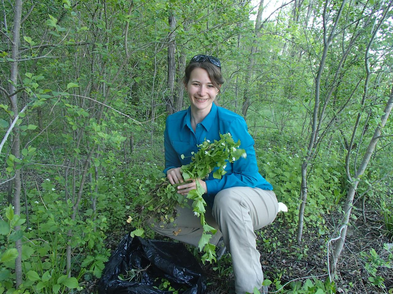 Volunteers can expect to fill many trash bags with garlic mustard at this event!