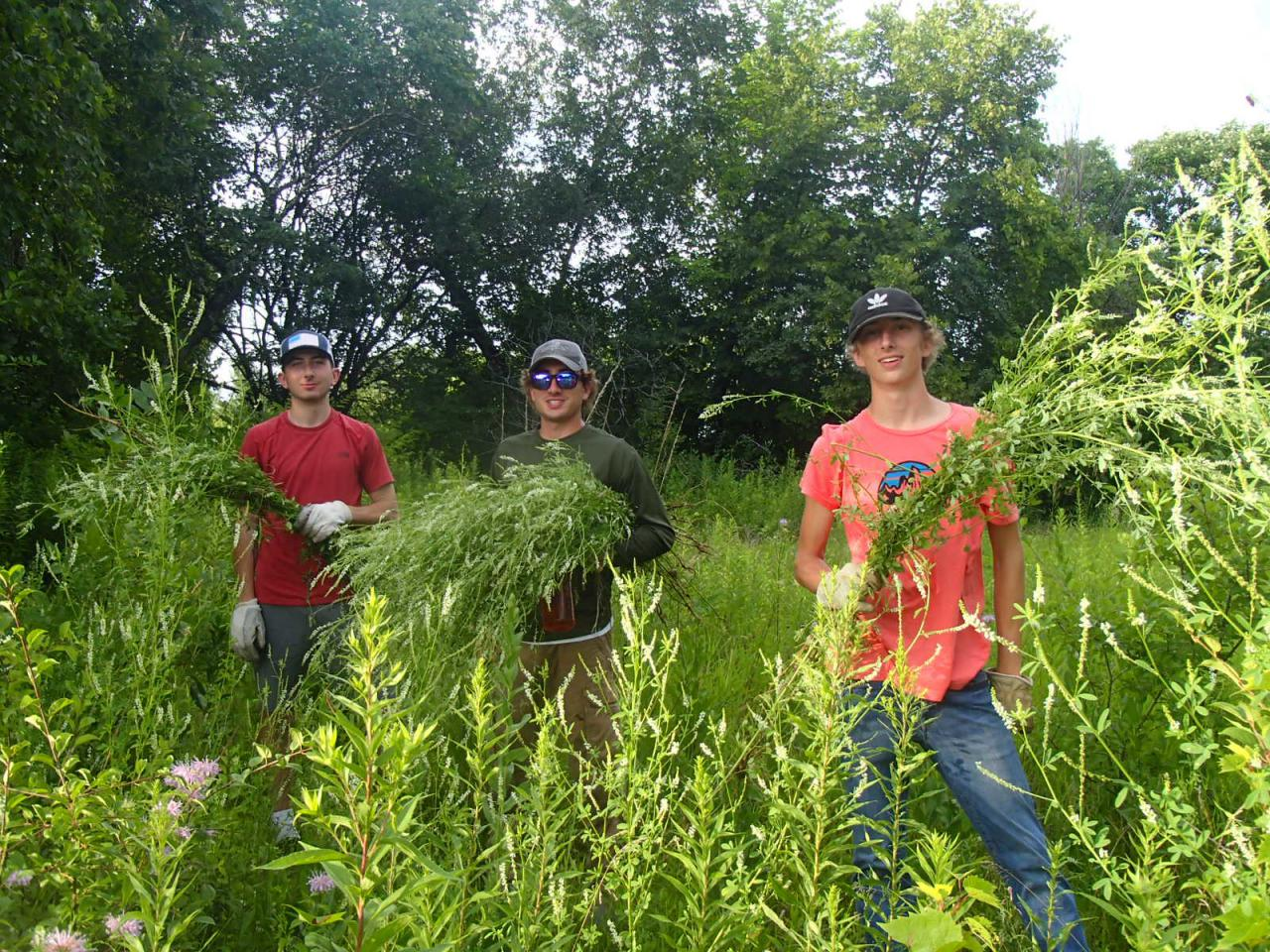 Three volunteers with the handfuls of invasive plants they removed at Pine Bend Bluffs SNA