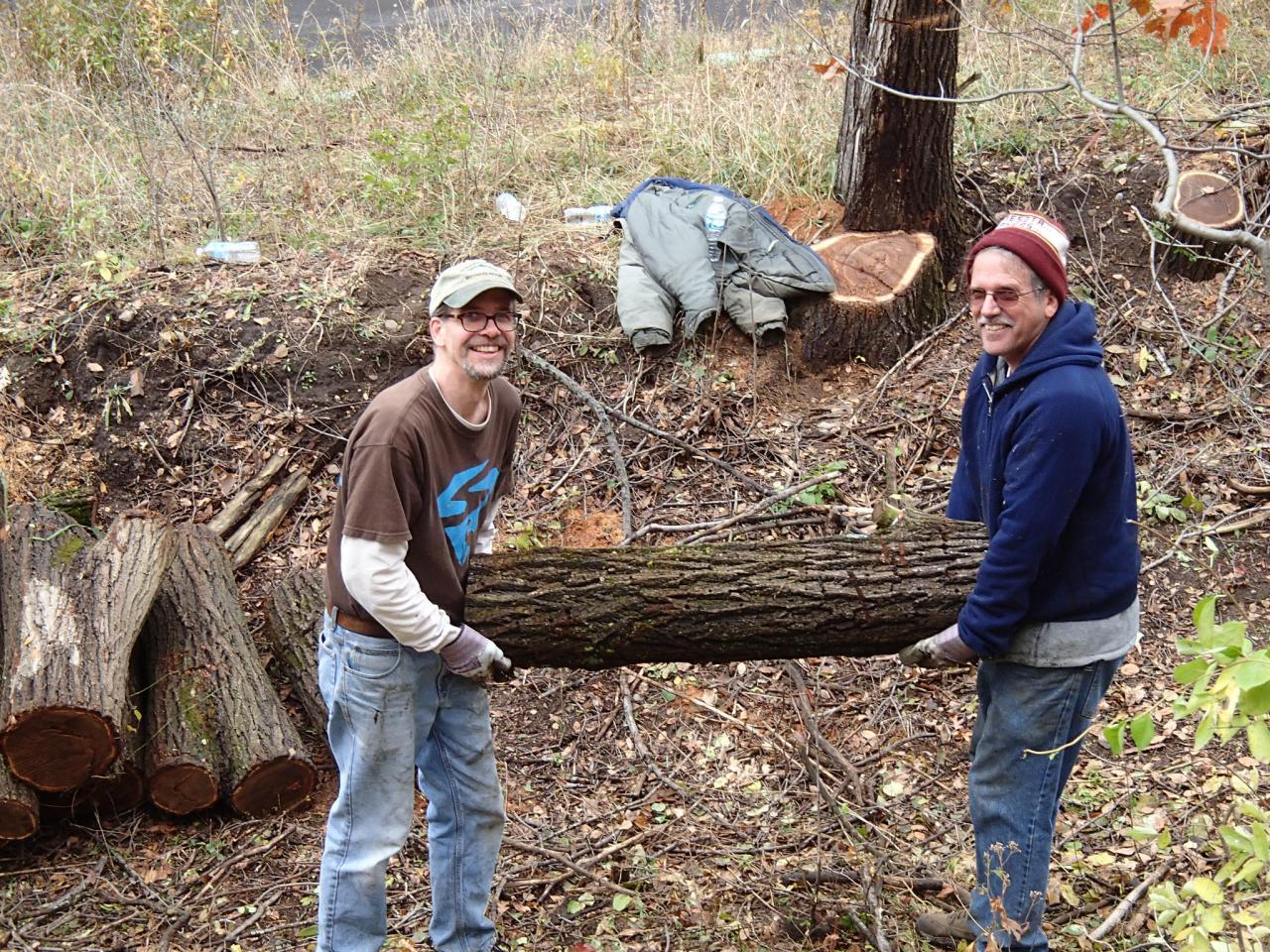 Volunteers helping each other with a large buckthorn log