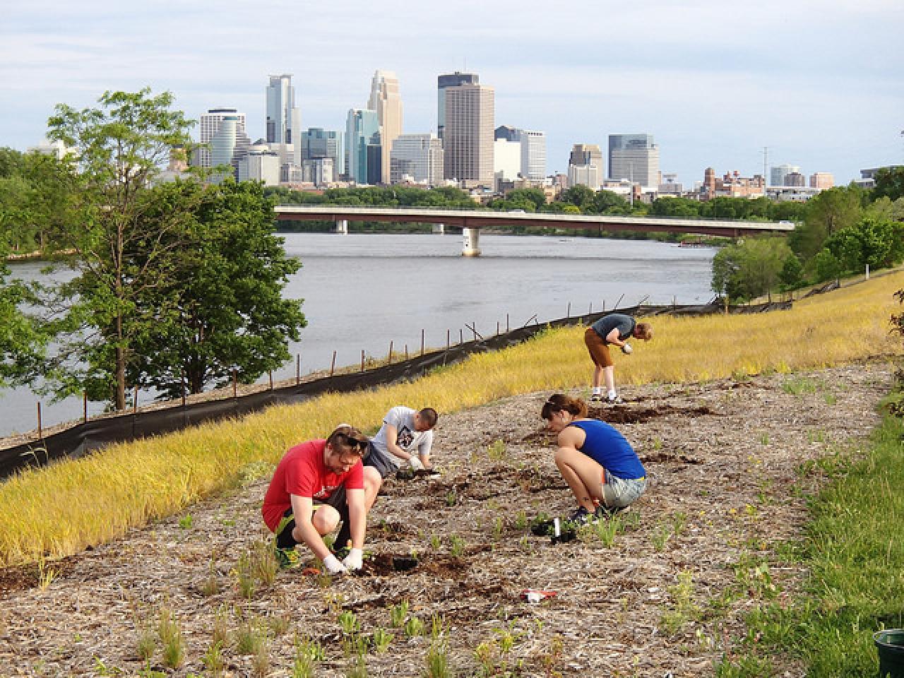 Volunteers tending the demonstration prairie at Ole Olson Park
