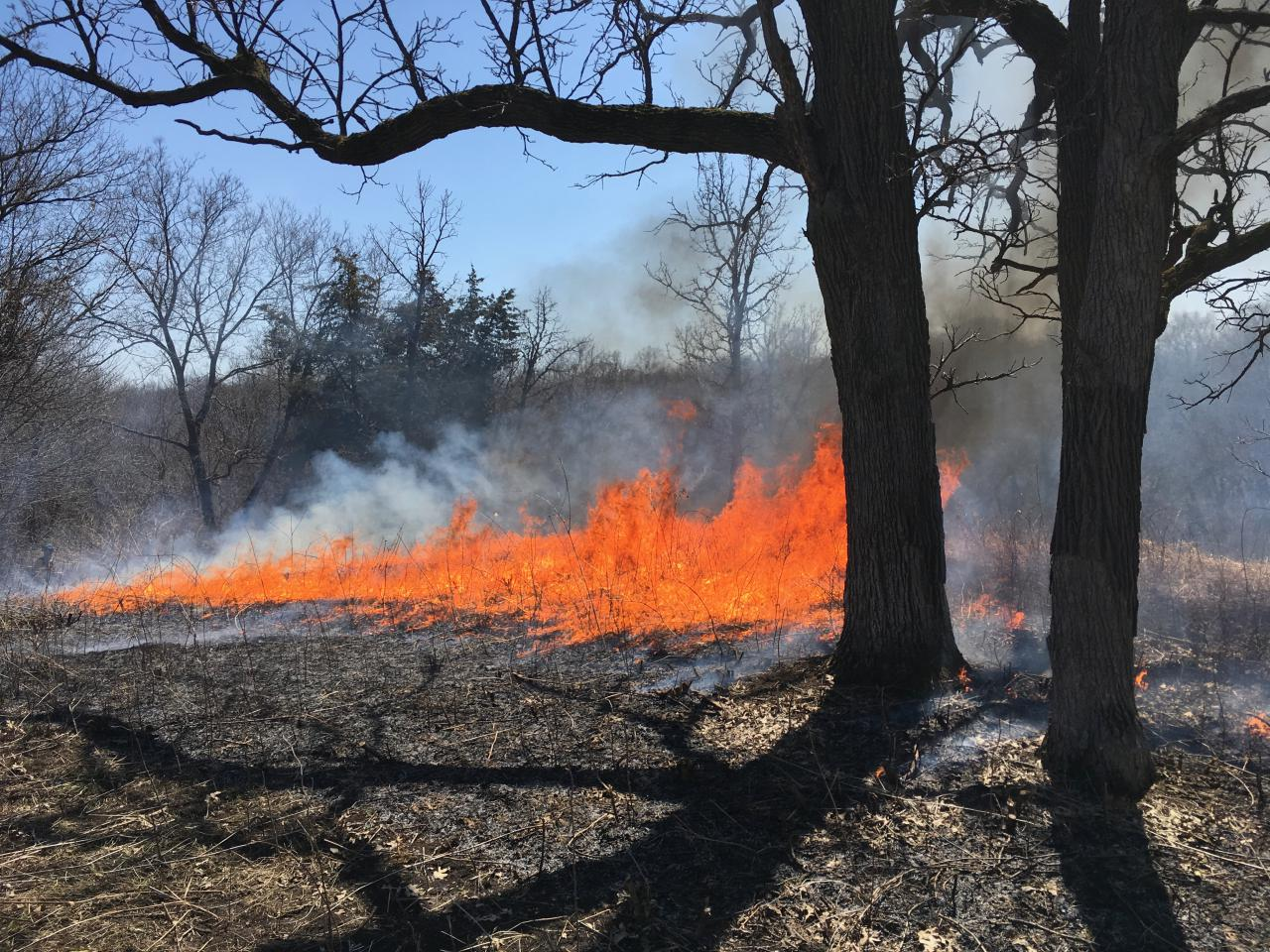 A prescribed burn rolls through a blufftop prairie at the Flint Hills Pind Bend Bluffs restoration site.