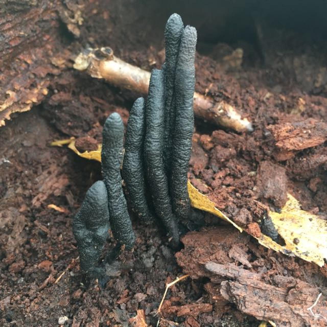 Dead man's finger found at Pine Bend Bluffs