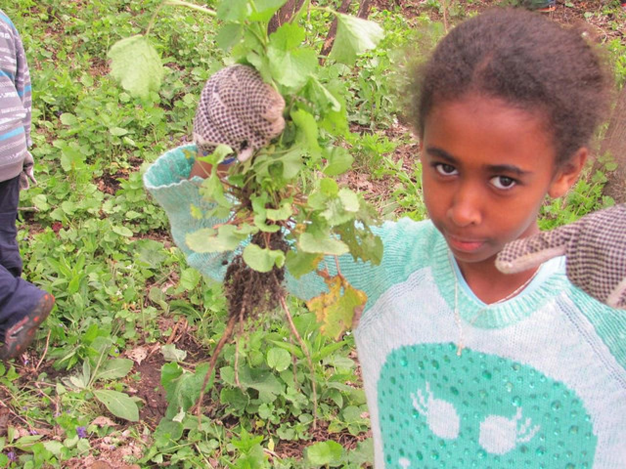Young volunteer with pulled garlic mustard