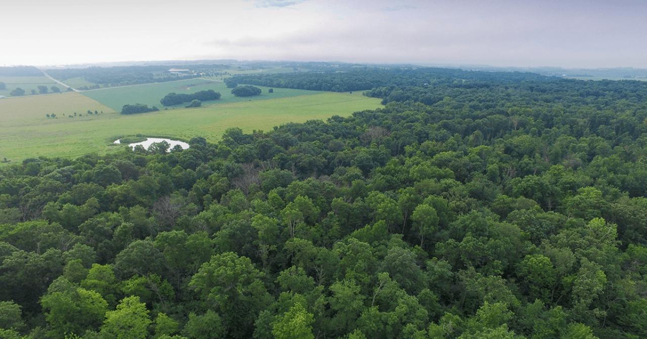 Hampton Woods aerial view