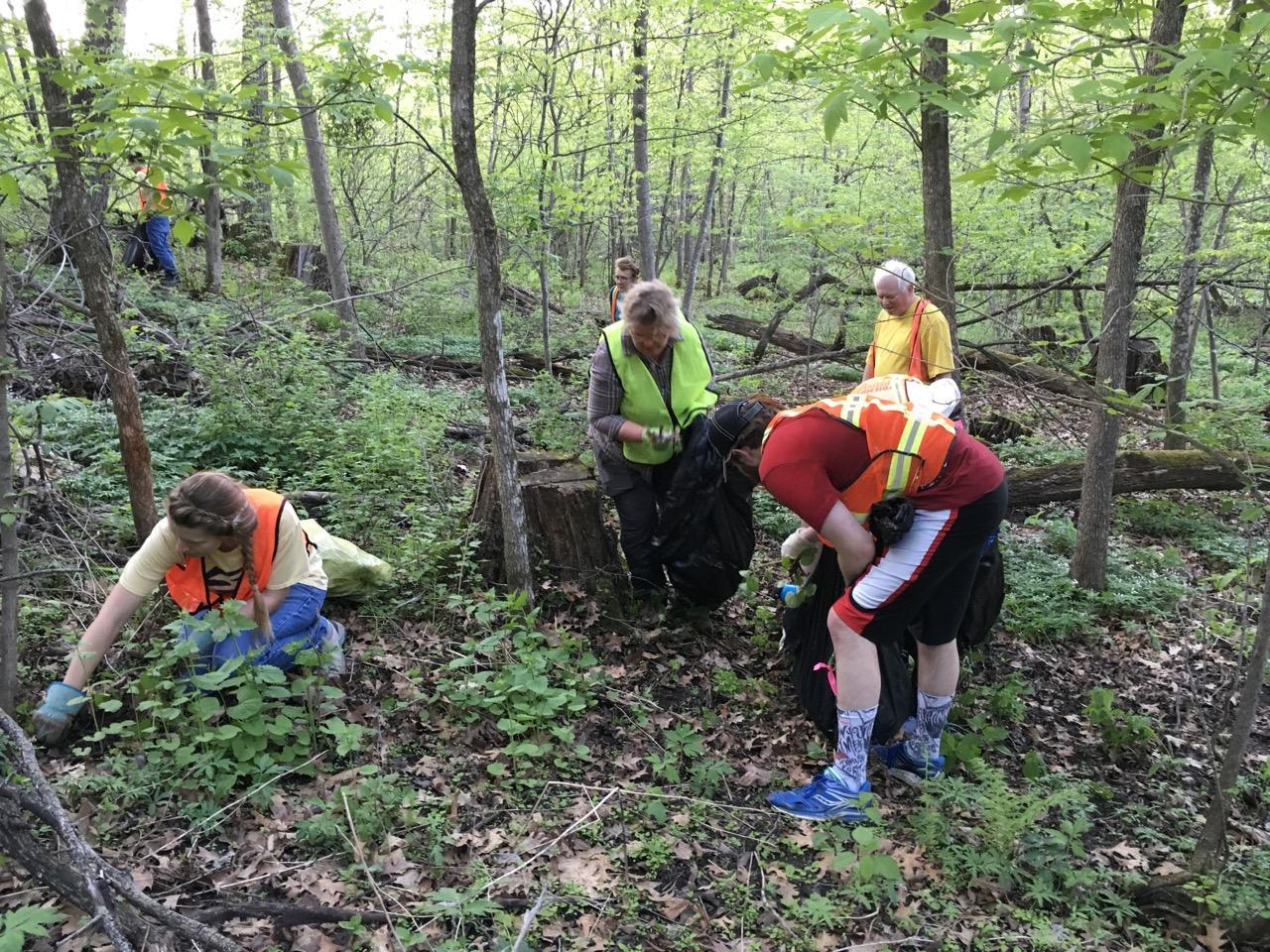 Volunteer pull garlic mustard at Hampton Woods
