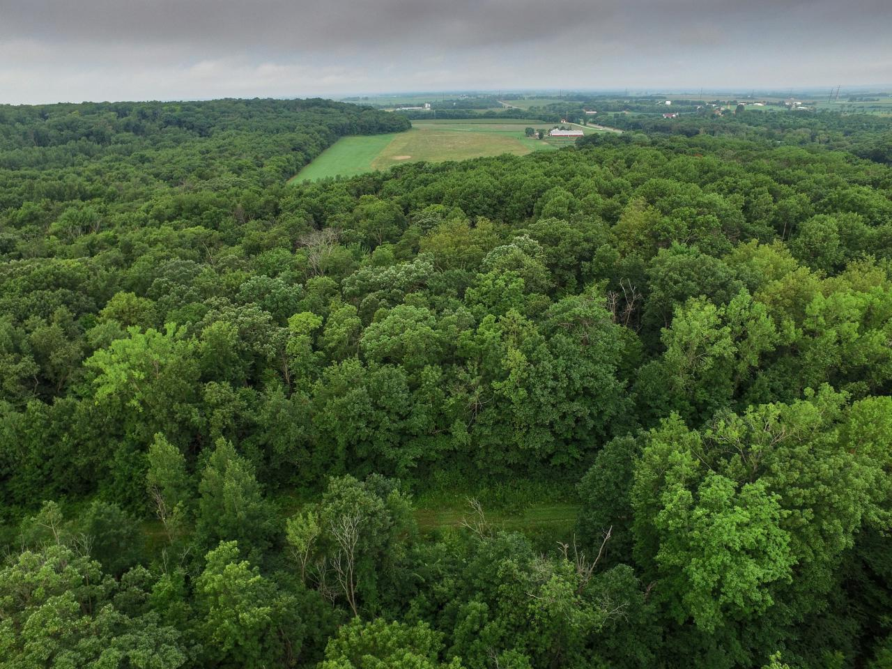 Aerial view of Hampton Woods