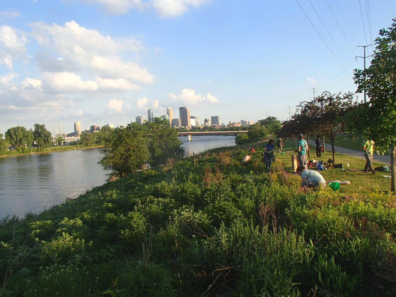 Volunteers tending the prairie along the Mississippi River at Ole Olson Park
