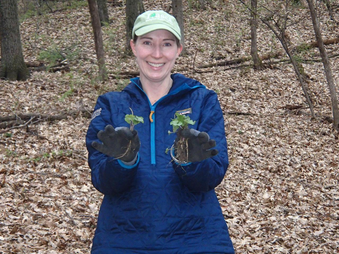 A volunteer pulls small garlic mustard plants