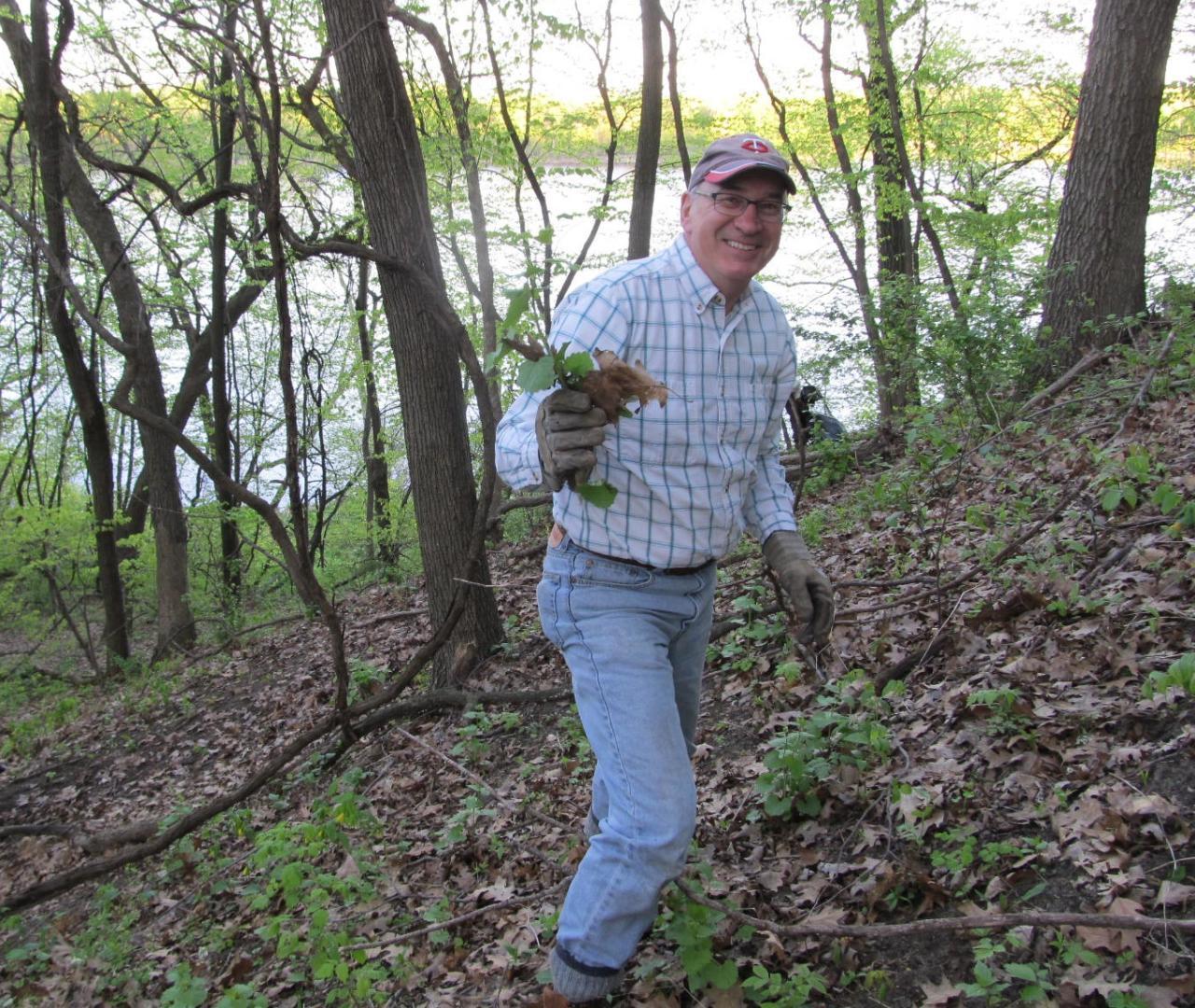 Volunteer removing garlic mustard at Pine Bend
