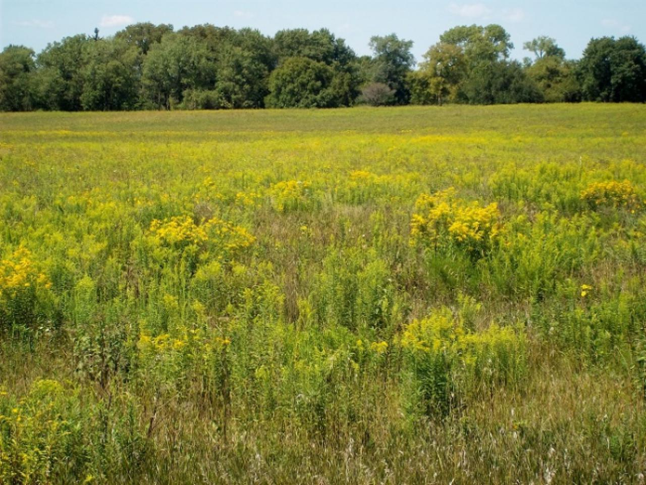 Native prairie plants are good for our waters, pollinators and, with the right incentives in place, farmers' incomes.