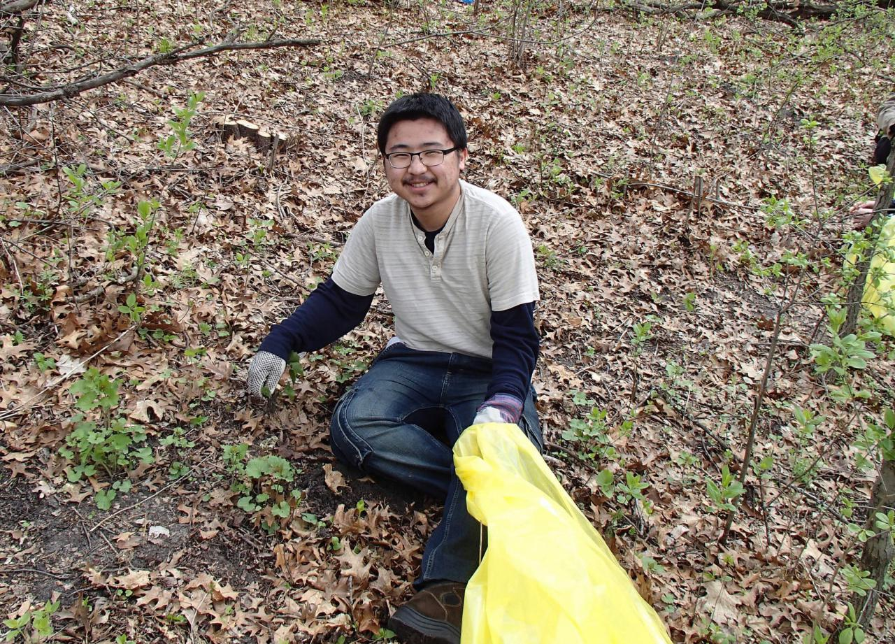 Volunteer pulling garlic mustard, an invasive plant.