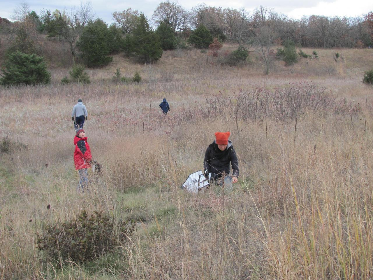 Volunteers collecting native seed at the Sand Coulee SNA