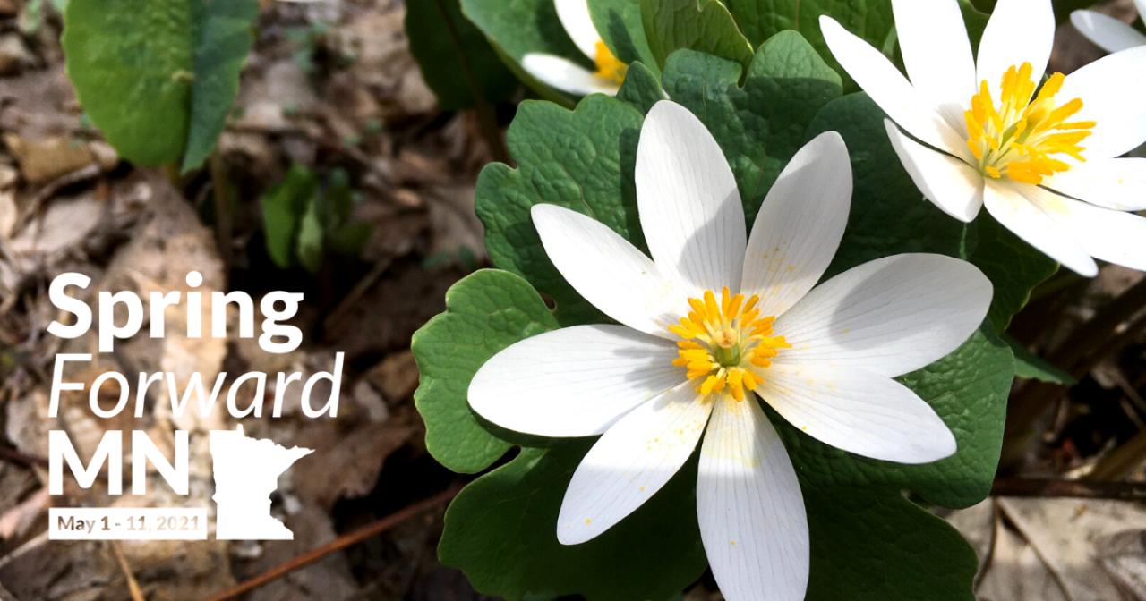 Spring Forward MN May 1-11 2021