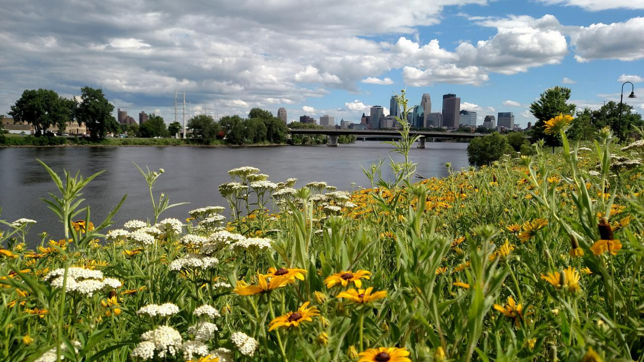 The Ole Olson prairie patch is not only beautiful, but good for pollinators and water quality.