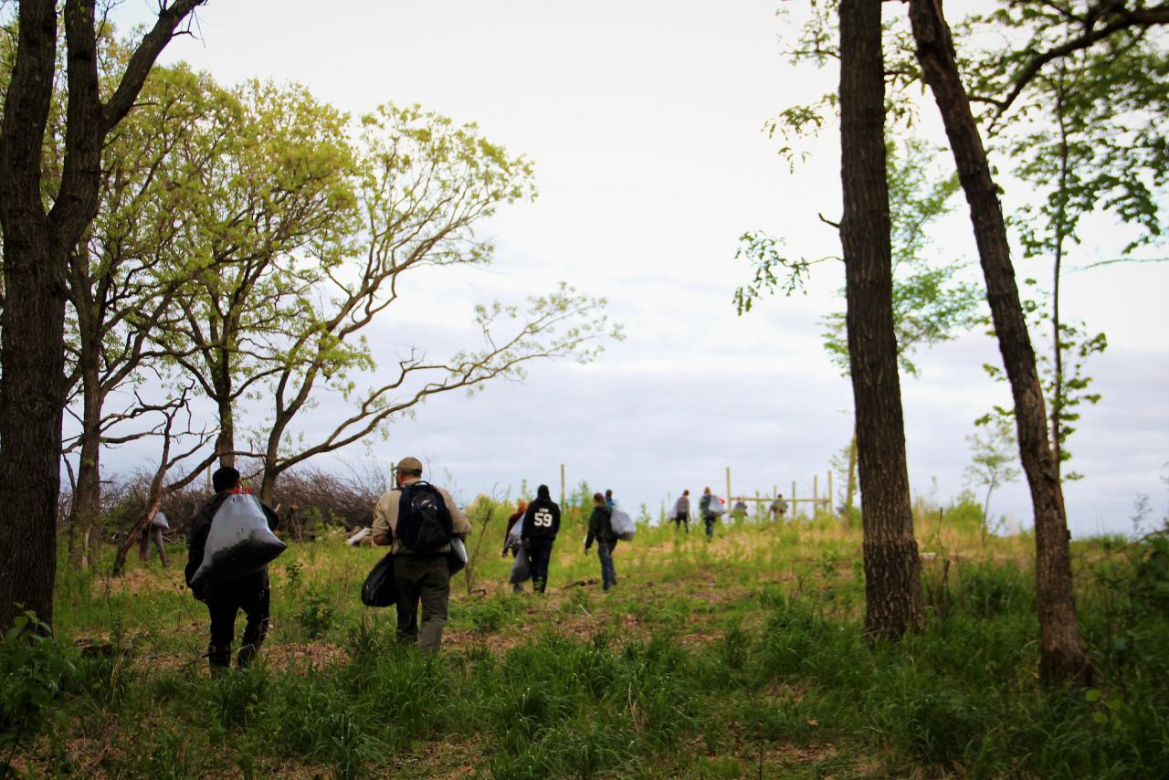 Volunteers haul out bags of garlic mustard at the Vermillion AMA