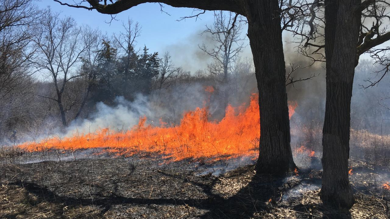 An April prescribed burn rolls through a blufftop prairie at the Flint Hills Pind Bend Bluffs property.