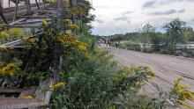 A group of residents walking through an industrial site are dwarfed by plants and flowers growing among industrial equipment.