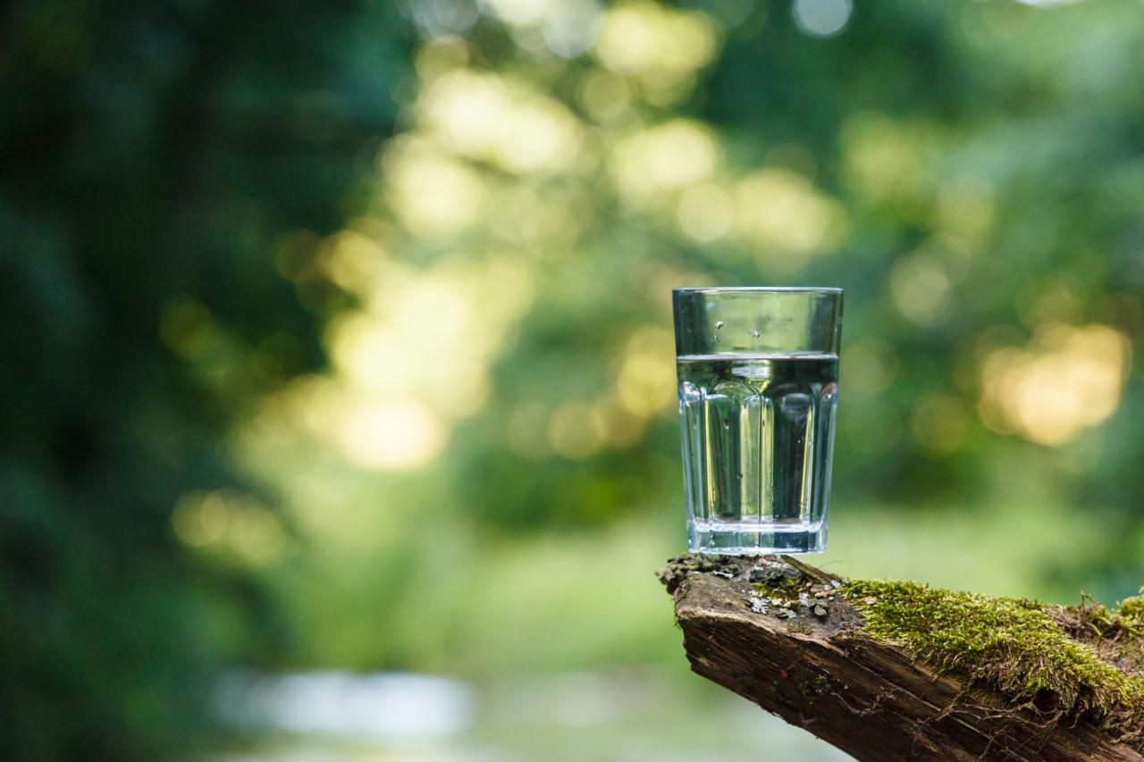 Water glass in a forest